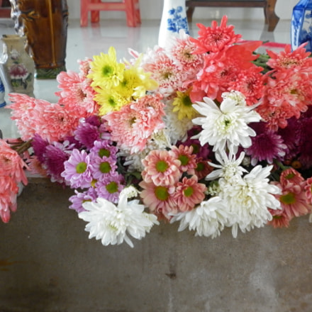 Flower beauty part 3, Panasonic DMC-F3