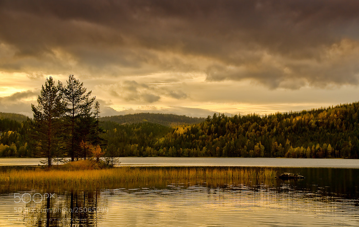 Photograph Evening Light by Ann Thomstad on 500px