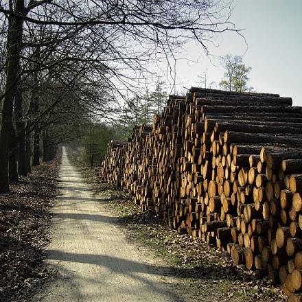 Wood, Sony DSC-P10
