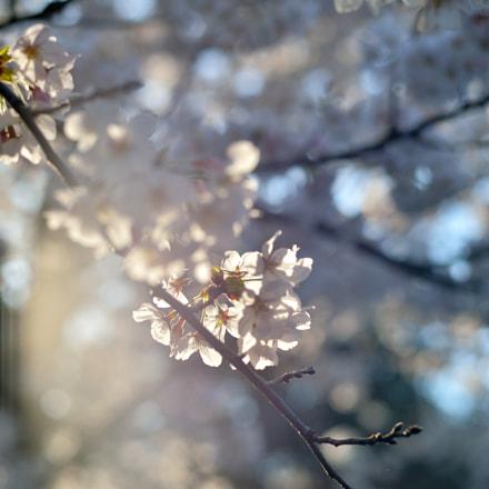sun shower, Nikon DF, AF-S Nikkor 58mm f/1.4G