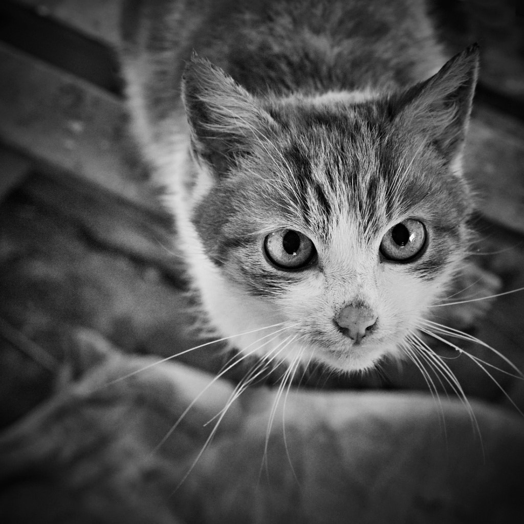 Photograph Charlie by Lubos Krahulec on 500px