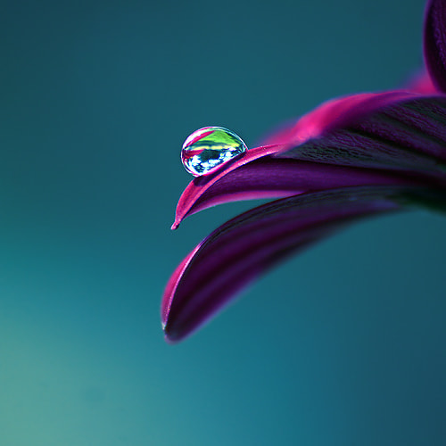 Photograph Lonely drop by Joakim Kræmer on 500px