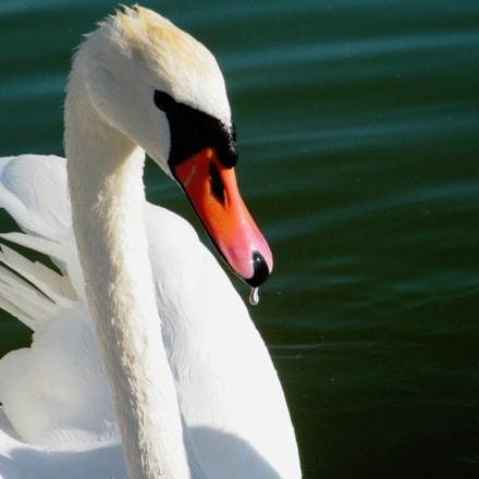 Swan, Fujifilm FinePix S2000HD S2100HD