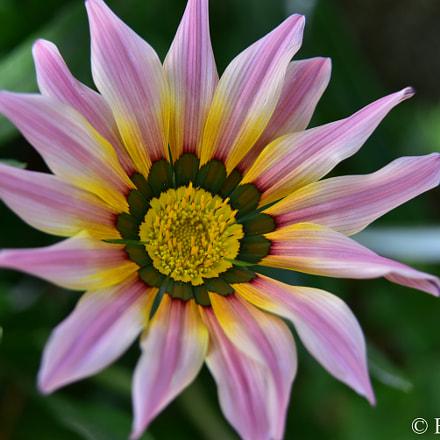 Flower Bolivia 2017, Nikon D750