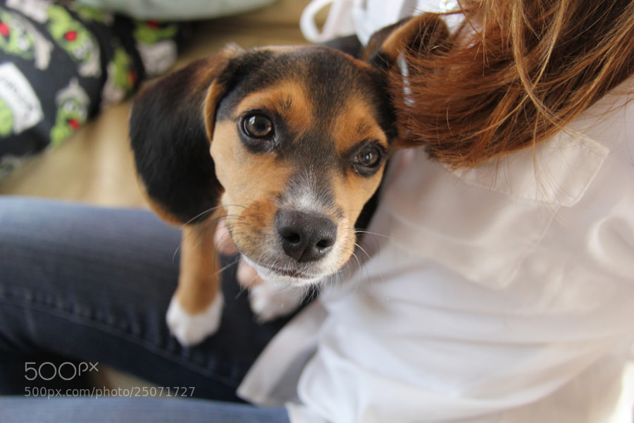 Photograph Puppy Eyes by Rain Shanks on 500px