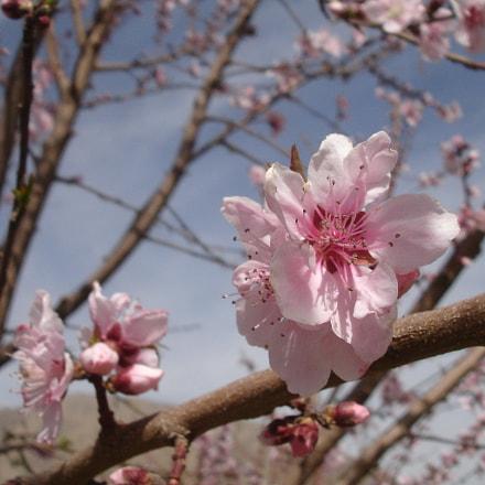 Flower, Sony DSC-P200