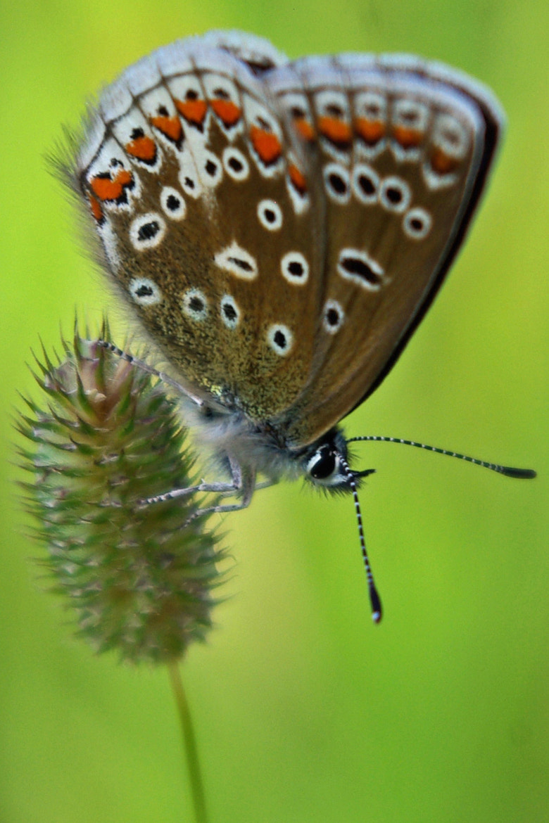 Photograph Butterfly by Lee Ashman on 500px