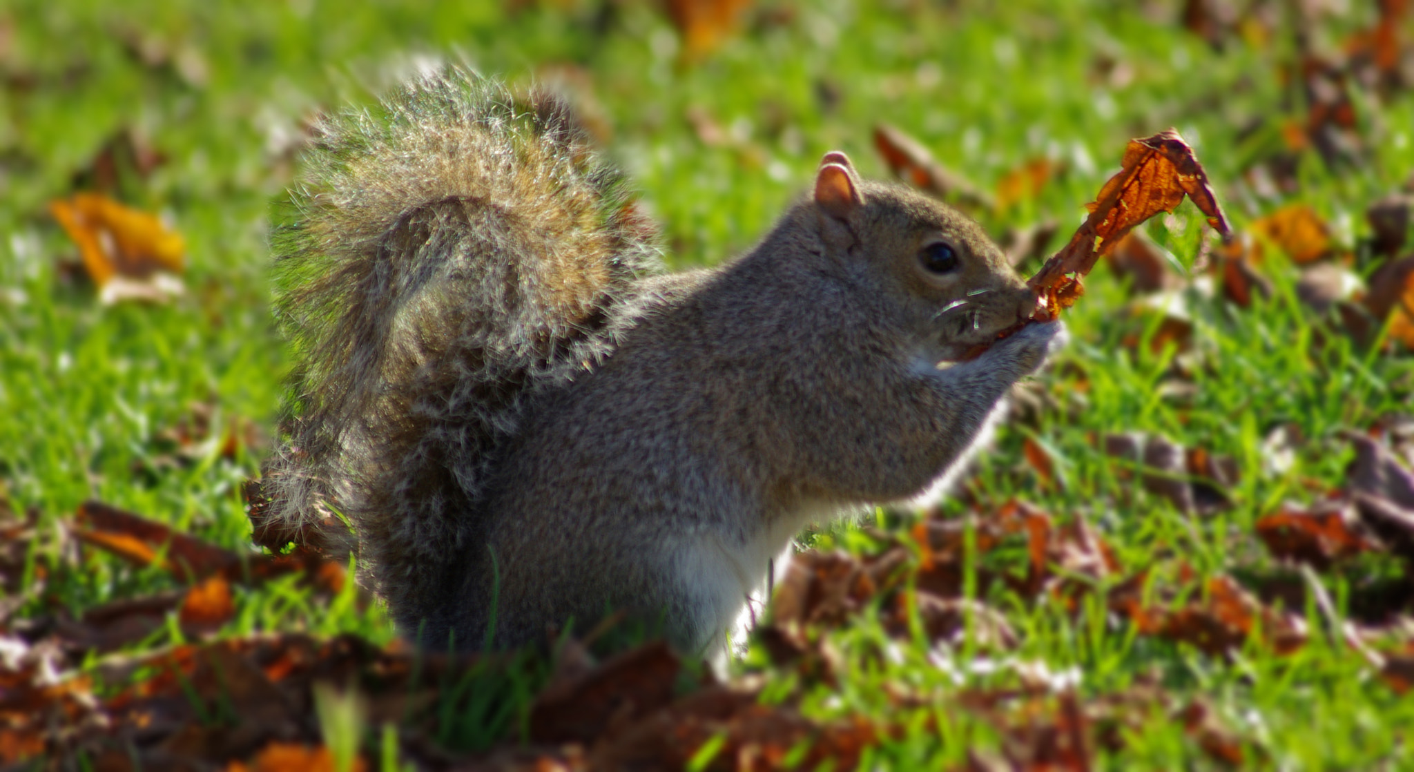 Photograph A Squirl With A Leaf by Lee Ashman on 500px