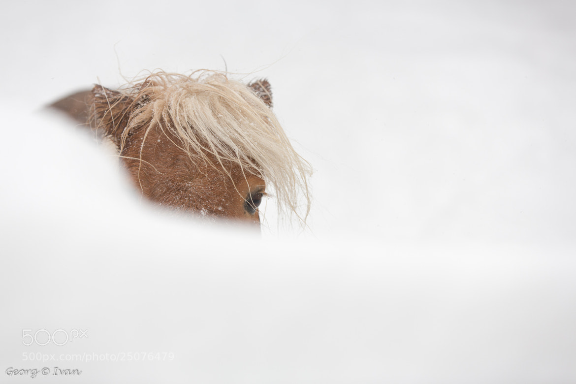 Photograph Pony in the Snow by Georg Ivan on 500px
