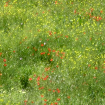 Wildflowers in France, Panasonic DMC-ZS3