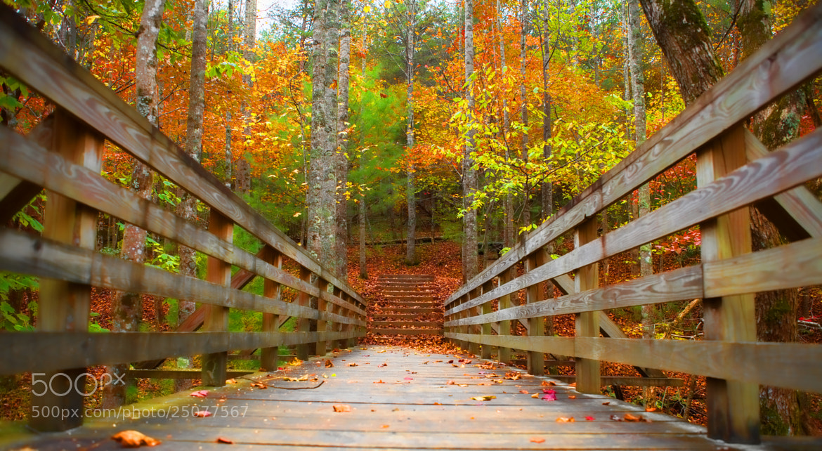 Photograph Woods Trail by George Bloise on 500px