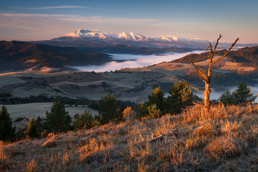Photograph In the first rays by Maciej Kolber on 500px