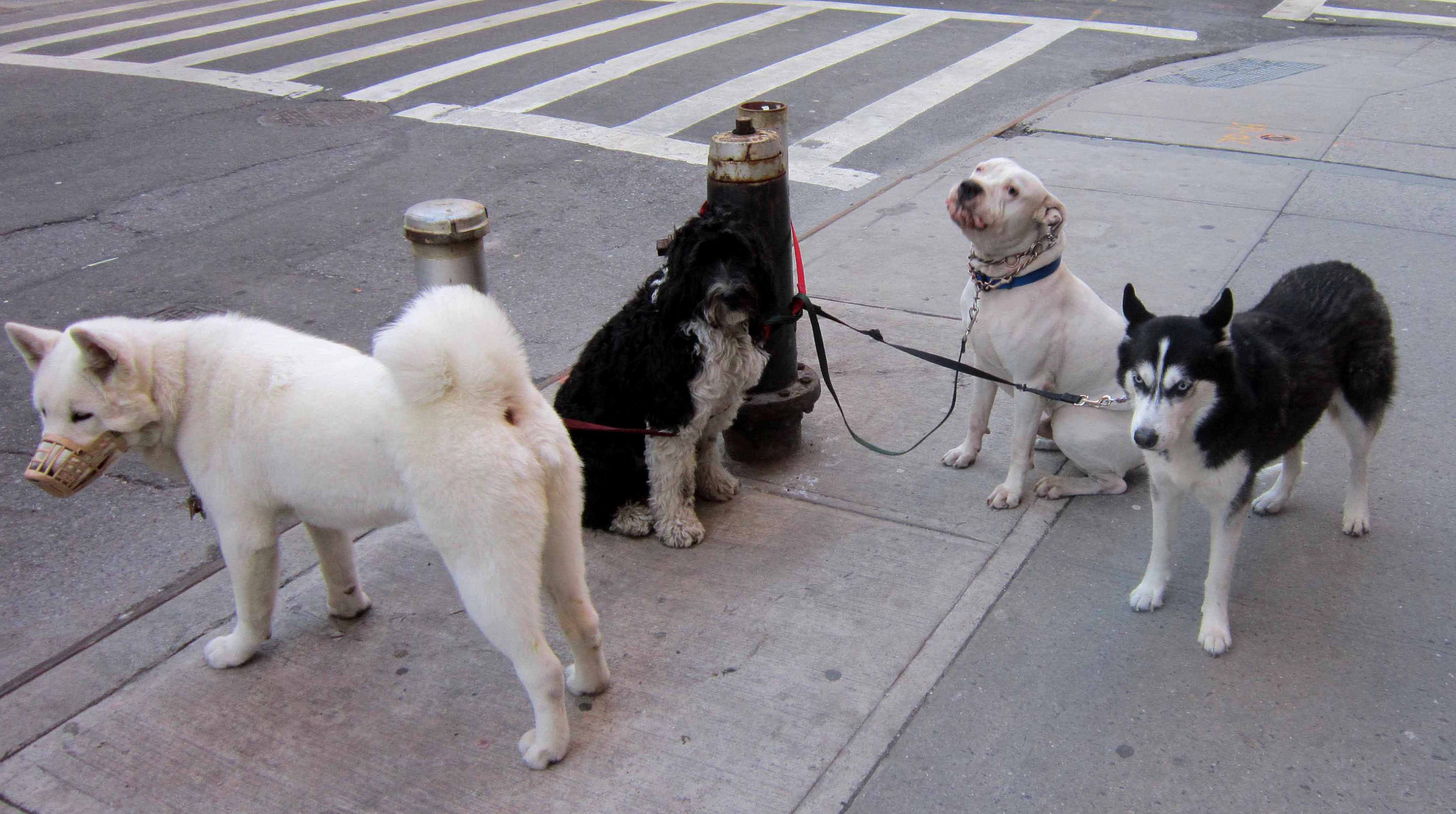 Photograph New York Dogs by Papo Mena on 500px