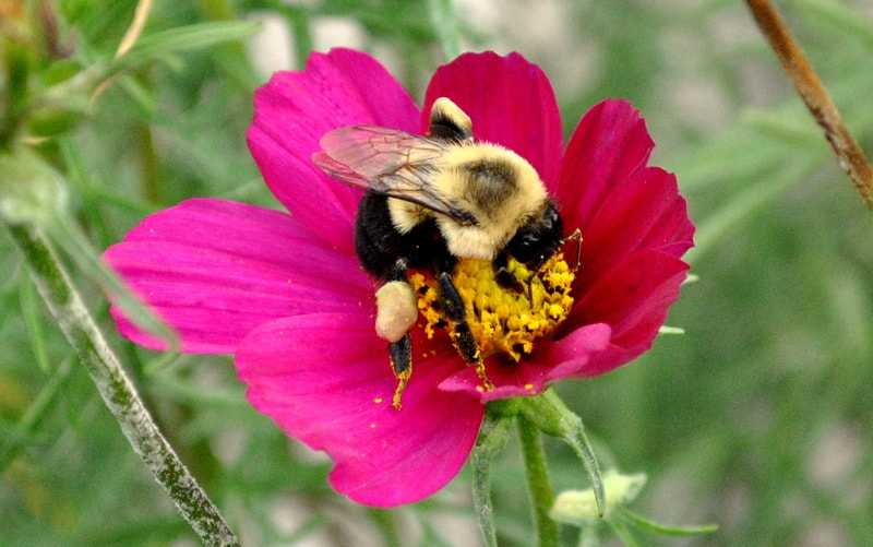 Photograph Bee by Sarah  on 500px
