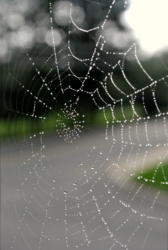Photograph Spider Web by Sarah  on 500px