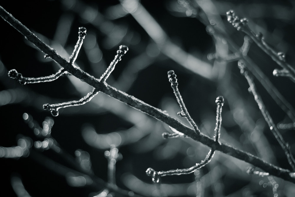 Photograph Branches by kara souza on 500px