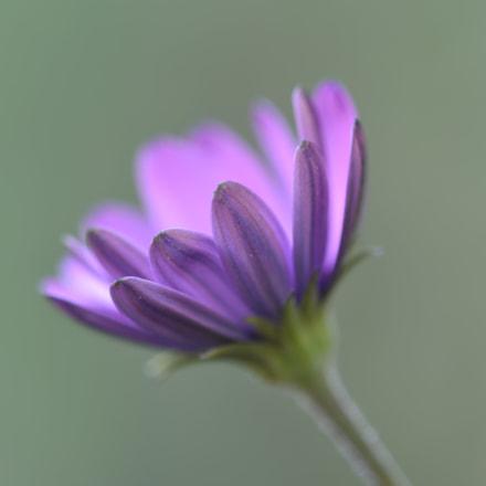 tiny purple flower, Nikon D750, AF Micro-Nikkor 200mm f/4D IF-ED