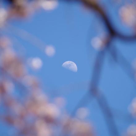Moon., RICOH PENTAX K-S2, smc PENTAX-DA L 55-300mm F4-5.8 ED