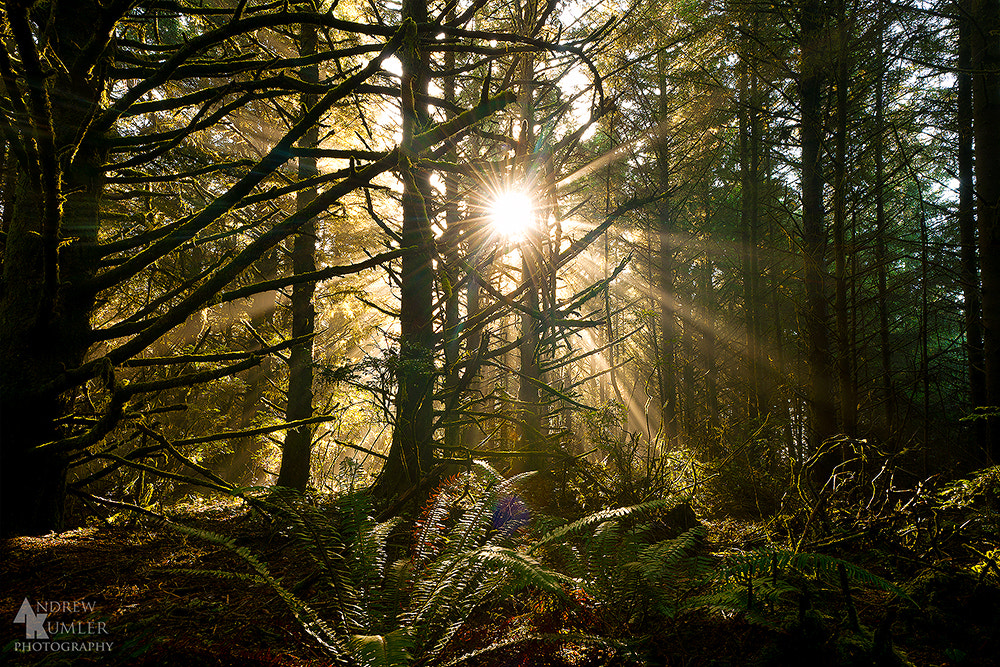 Photograph Coastal Forest... by Andrew Kumler on 500px