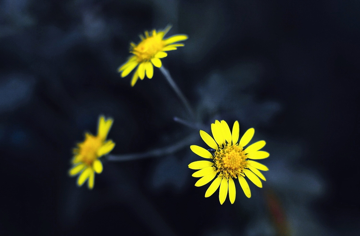 Photograph Yellow Flowers by Jin Kim on 500px