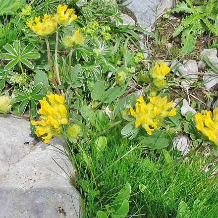 Alpenflora, Canon POWERSHOT A400