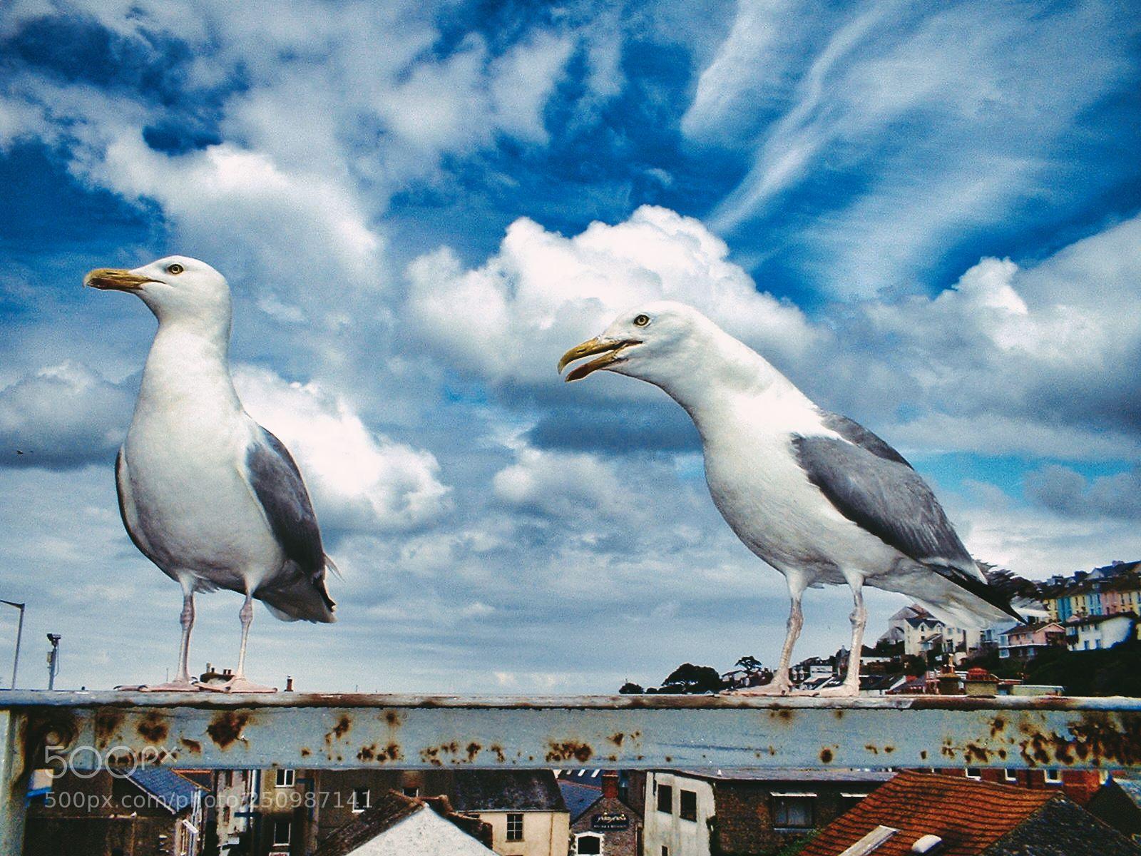 "Fujifilm FinePix A202 sample photo. ""Seagulls of brixham"" photography"