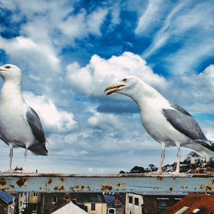Seagulls of Brixham, Fujifilm FinePix A202