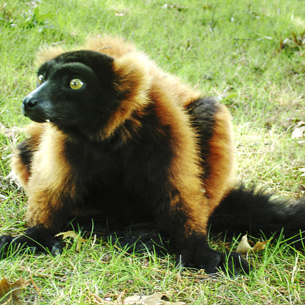 Lemur zone, Sony DSC-P150