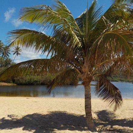 palm beach, Nikon COOLPIX W100