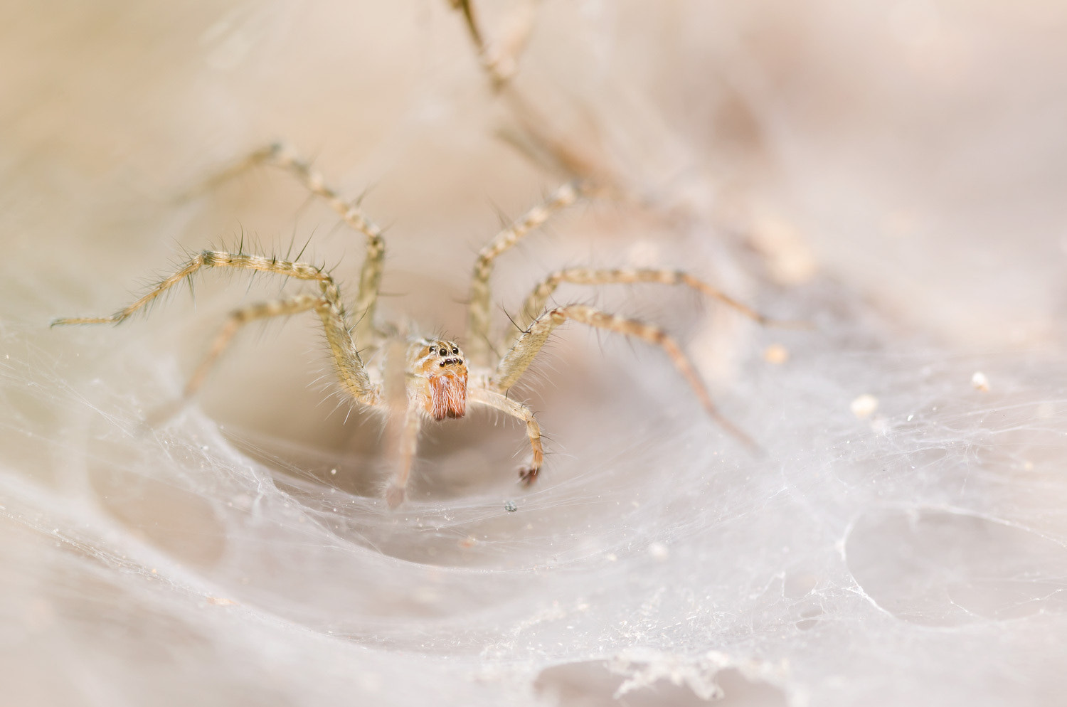 Photograph Wolf spider by Peerasith Chaisanit on 500px