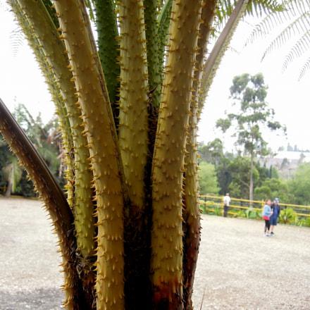 A tall spiny plant, Nikon COOLPIX P300