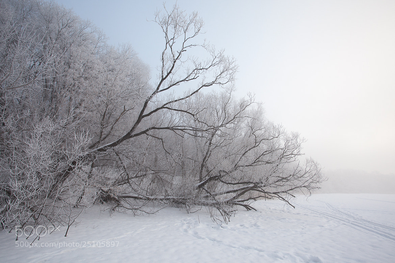 Photograph Tambov winter fog  by Denis Belyaev on 500px