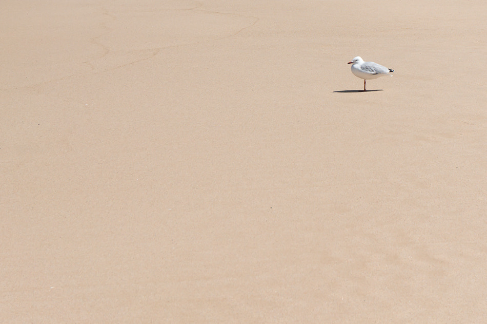 Photograph seagull by Kimberly Poppe on 500px