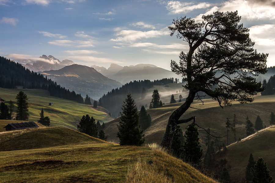 Photograph Crooked Tree in Landscape by Hans Kruse on 500px