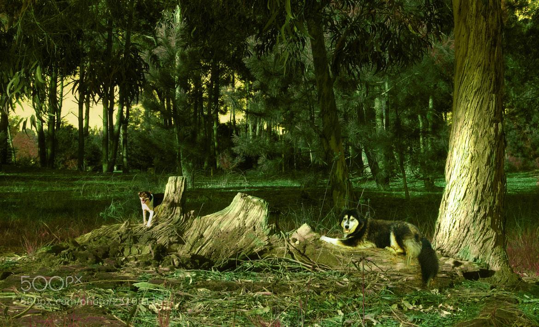 Photograph (:  SisterS  :) by Ian Blöckhead on 500px