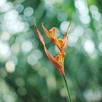 Natural flower bird