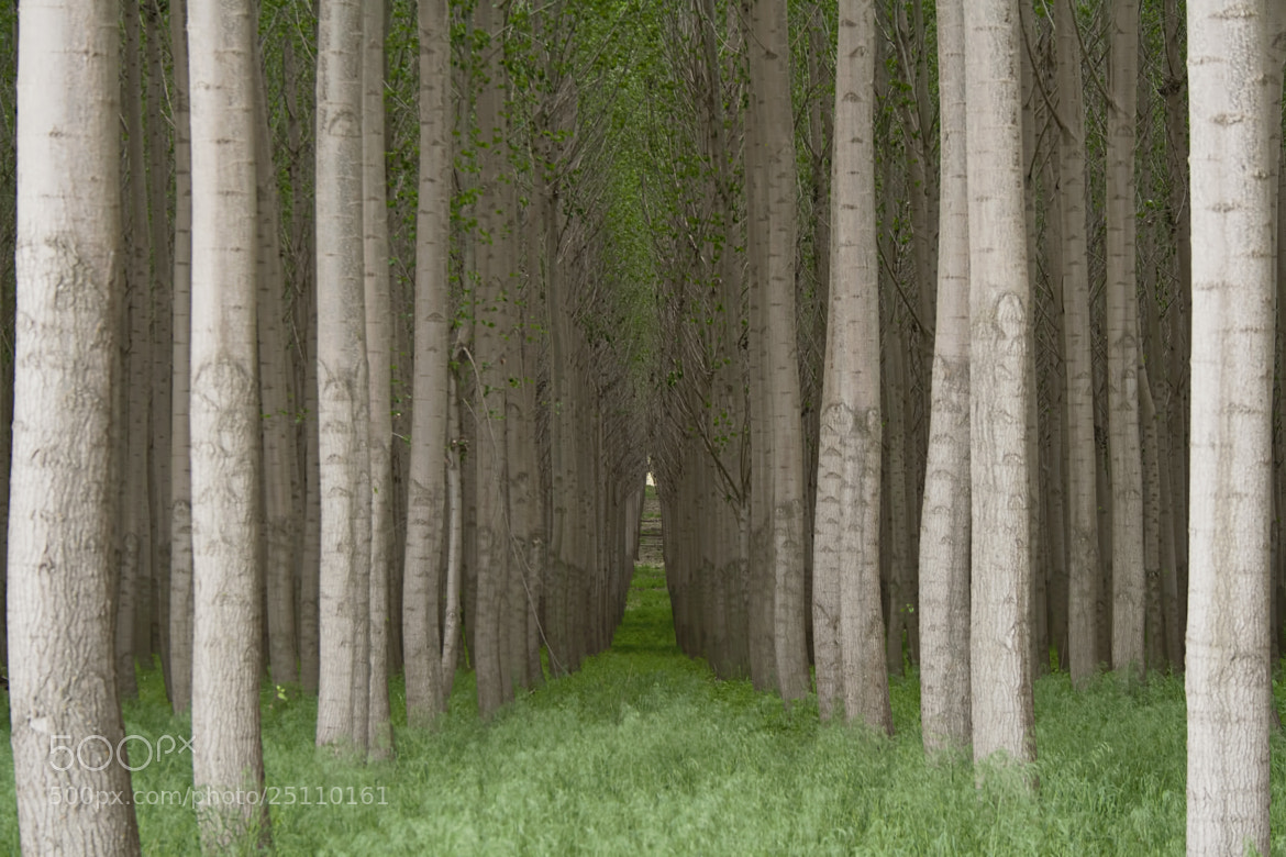 Photograph Heart's Pathway Home by Renae Smith on 500px