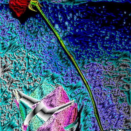 Rose, Sony DSC-P93
