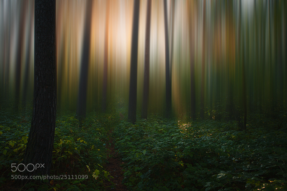 Photograph along the forest path to light  by Marat Akhmetvaleev on 500px