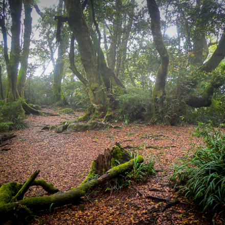Beech Forest in the, Panasonic DMC-FX2