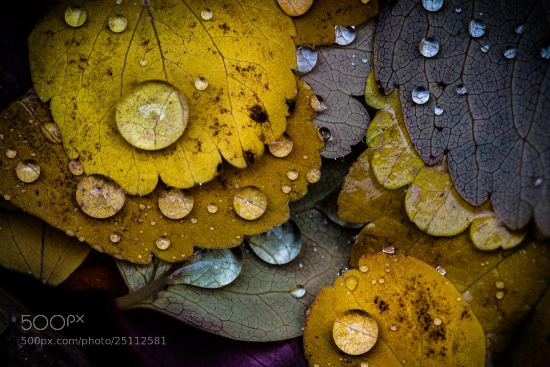 Photograph Autumn colors by Jari Peltoniemi on 500px