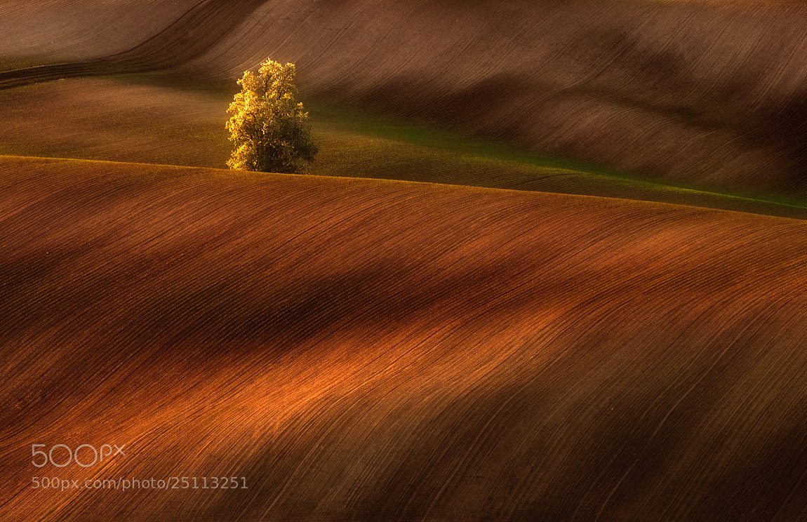 Photograph Golden tree by Jozef Micic on 500px