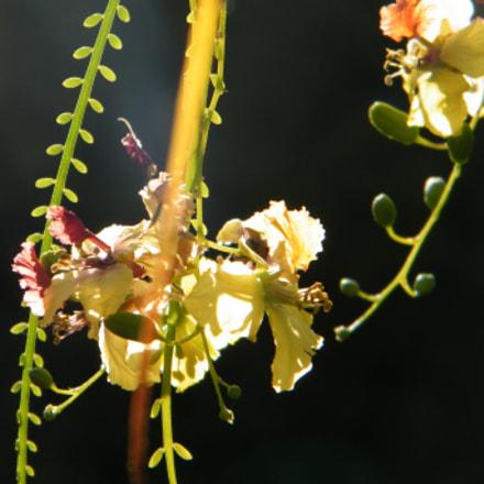 Flower in the night, Fujifilm FinePix S2000HD S2100HD