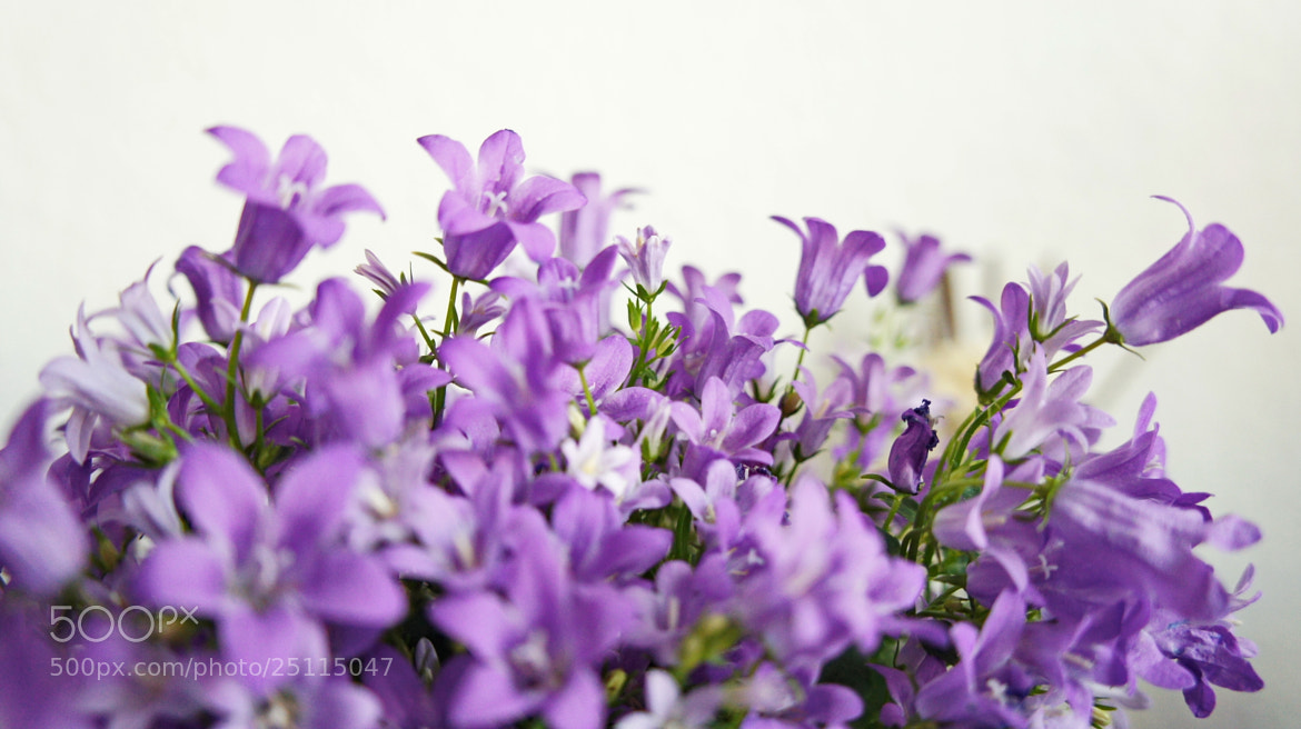 Photograph FLOWERS° by Hiwa  on 500px