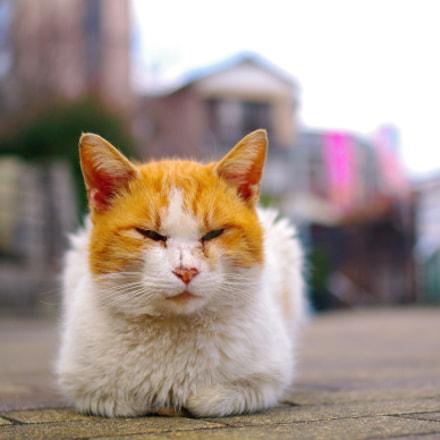 Sleeping Cat, Pentax K-7, smc PENTAX-DA 35mm F2.4 AL