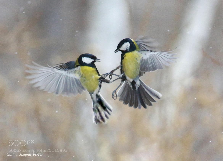 Photograph Snowy Waltz ... by Galina   Jacyna on 500px