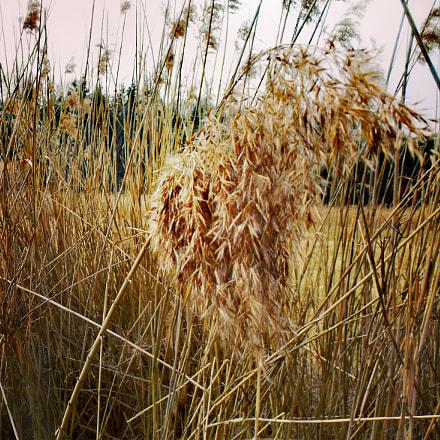 Reed, Fujifilm FinePix S1500