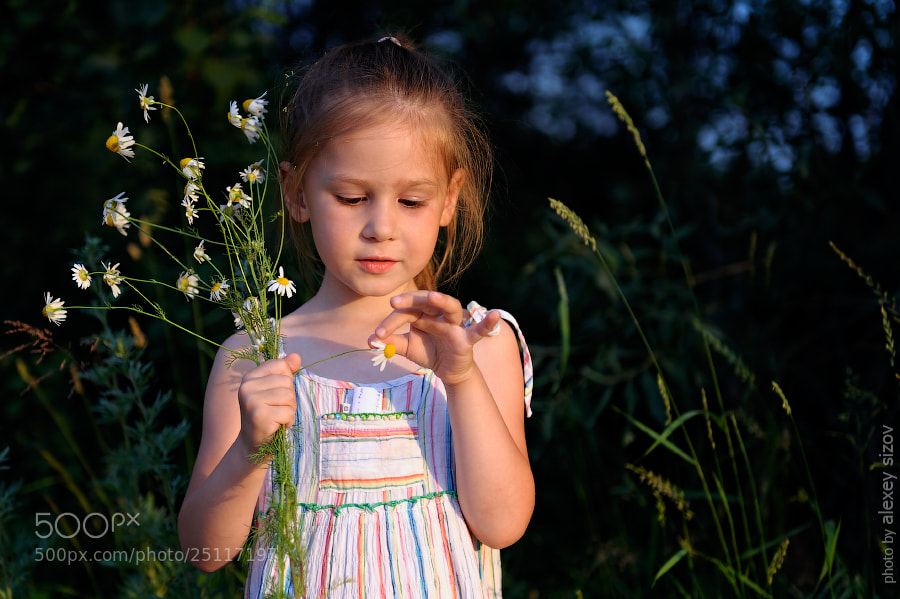 Photograph Divination by daisy by Alexey Sizov on 500px