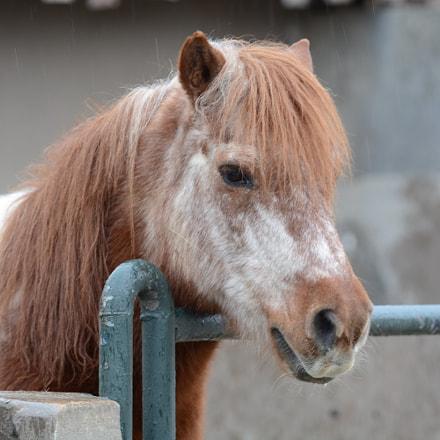 Horse, Nikon D7100, Sigma APO Macro 150mm F2.8 EX DG HSM