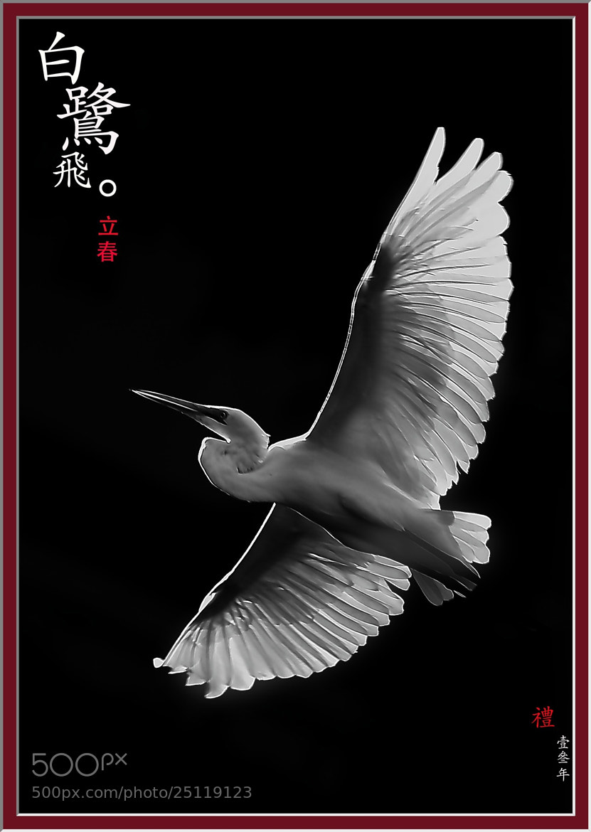 Photograph Egret by Ben. S on 500px